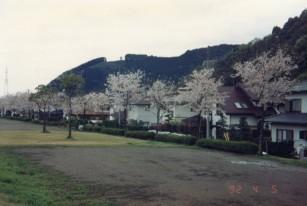 92年の桜